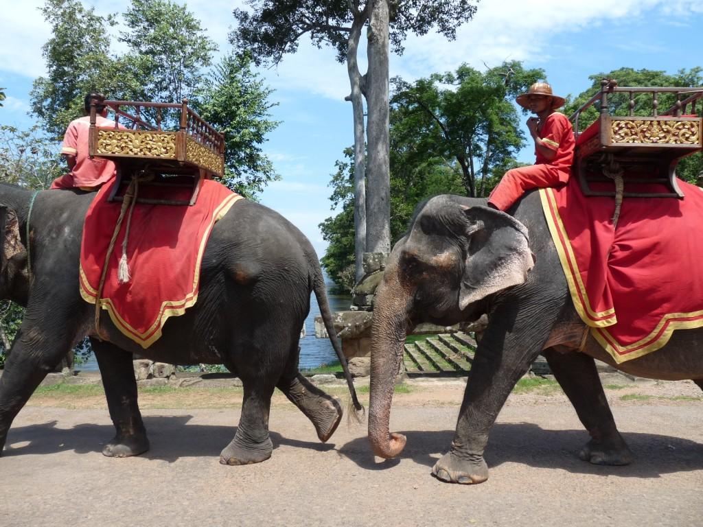 Les éléphants à Angkor