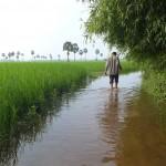 Sovann dans les rizières de son village.