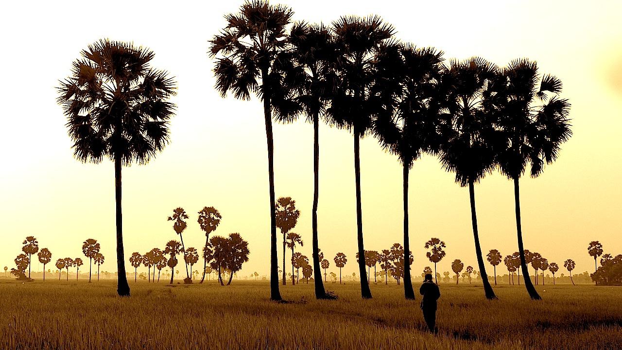 La magie des rizières
